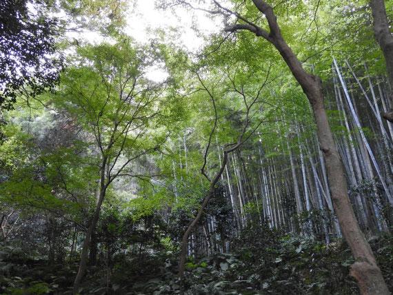 山門への石畳の竹林