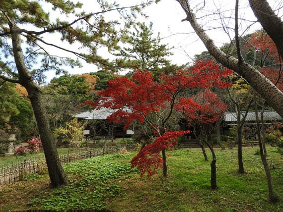 紅葉の庭園から旧燈明寺本堂を望む