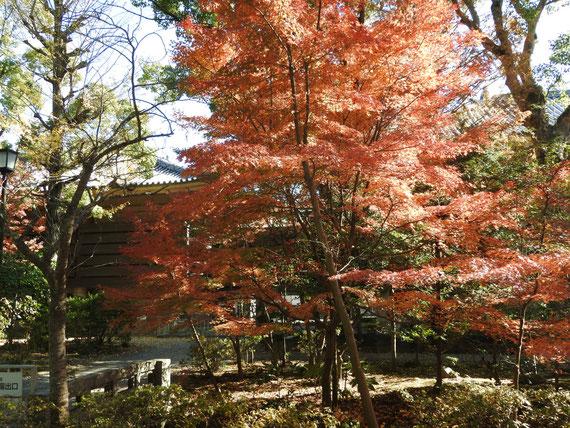 紅葉に包まれる鎌倉国宝館