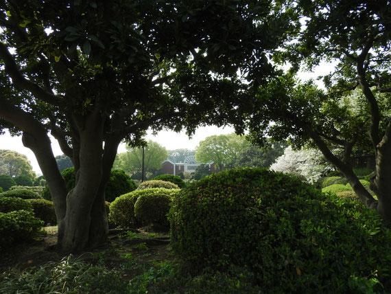 港の見える丘公園からガーデンを見る
