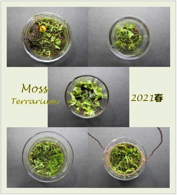 苔テラリウム 2021春