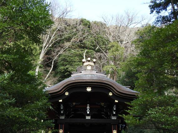 樹木に包まれる白旗神社