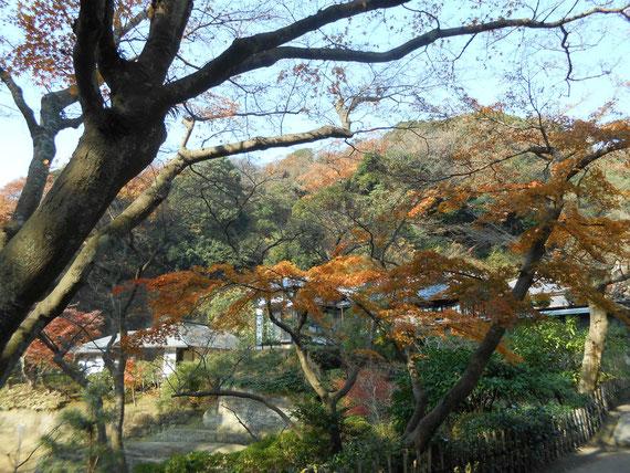 妙香池から見た、正伝庵の紅葉