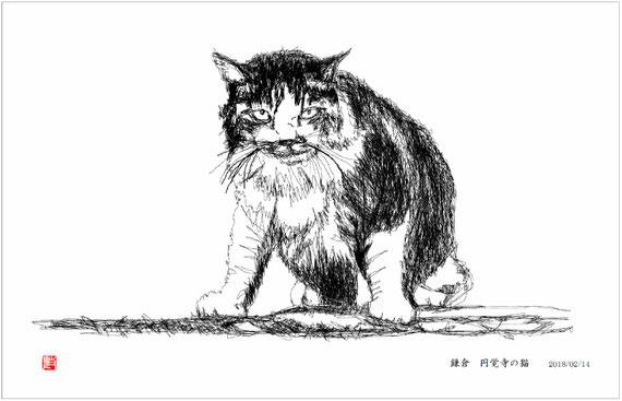 円覚寺の猫 線画 2018/02/14制作