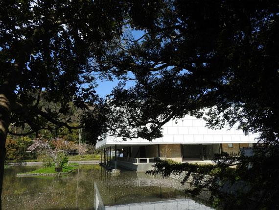 鶴岡八幡宮の参道から平家池越しにみる旧近代美術館