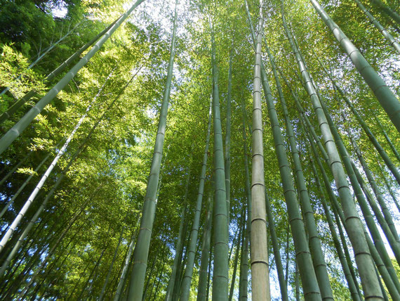 境内の竹林が、またよかったです