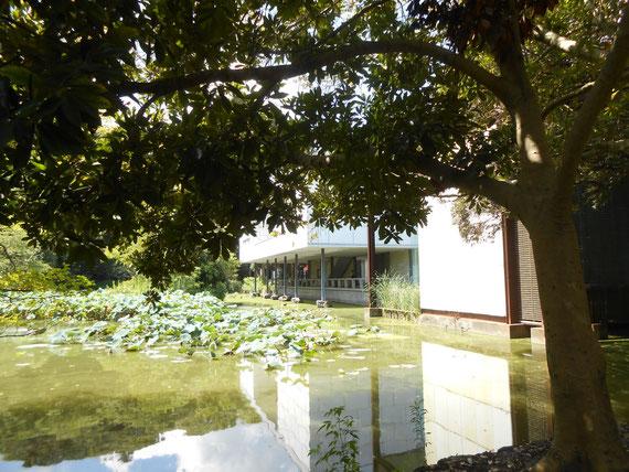 八幡宮参道横の平家池から、美術館を望む。このアングルが一番好きです。