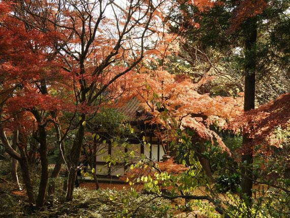 紅葉の中の旧天瑞寺寿塔覇堂