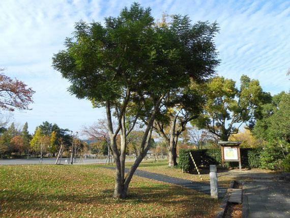 今は市民の憩いの公園になっています