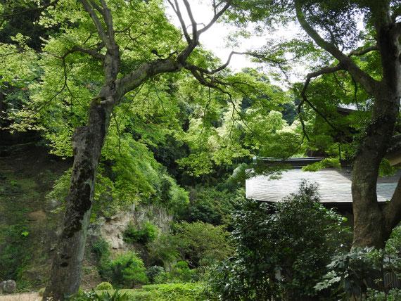 本堂裏の樹木