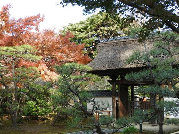境内からみる、紅葉の長寿禅寺山門