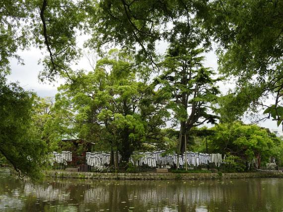 源氏池に浮かぶ、旗上弁財天社。 源頼朝が承久の乱の出陣の際に旗上げした。