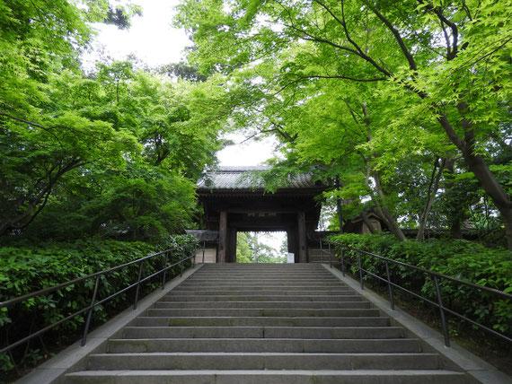 円覚寺総門(端鹿山)5月