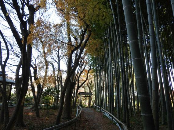 竹林の遊歩道
