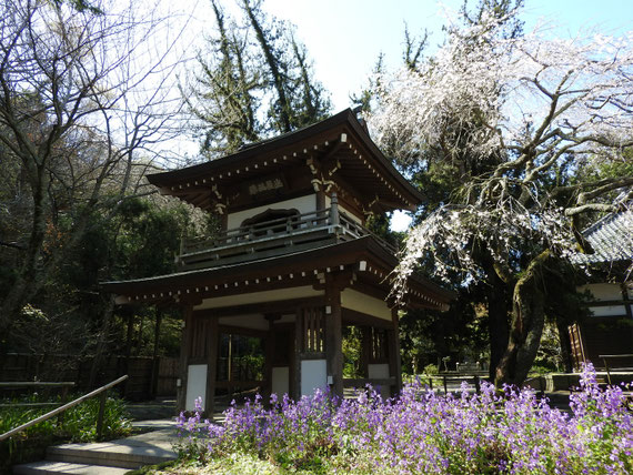 浄智寺鐘楼門 4月
