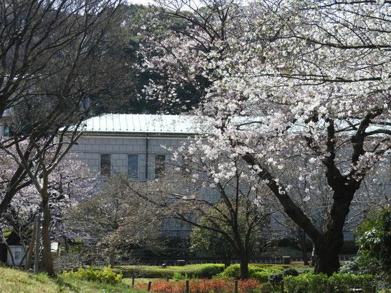 公園から観る本館 桜満開