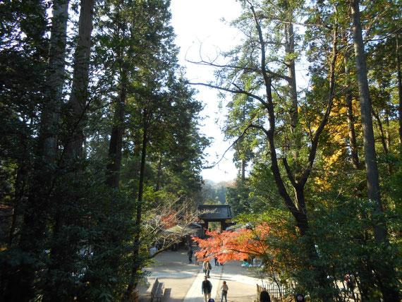 円覚寺境内の樹木と紅葉