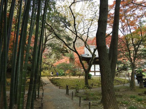 蓮華院間から旧天瑞寺寿塔覇堂を望む