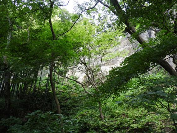 竹の庭の緑