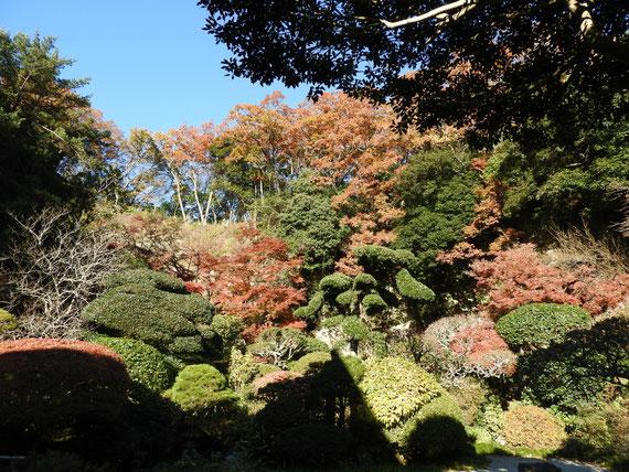 裏庭園から境内の紅葉