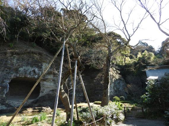 瑞泉寺庭園と天女洞