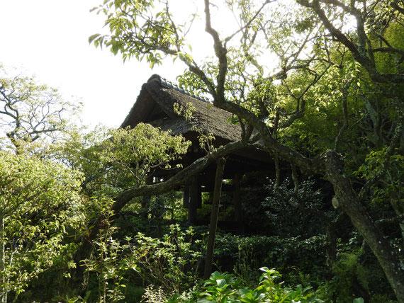 参道から観る、樹木に包まれた鐘楼