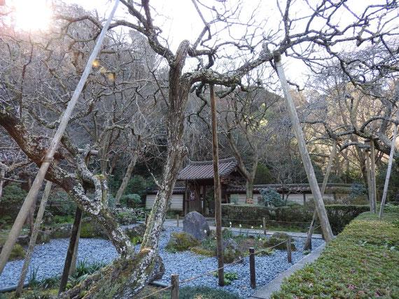 前庭園と梅林