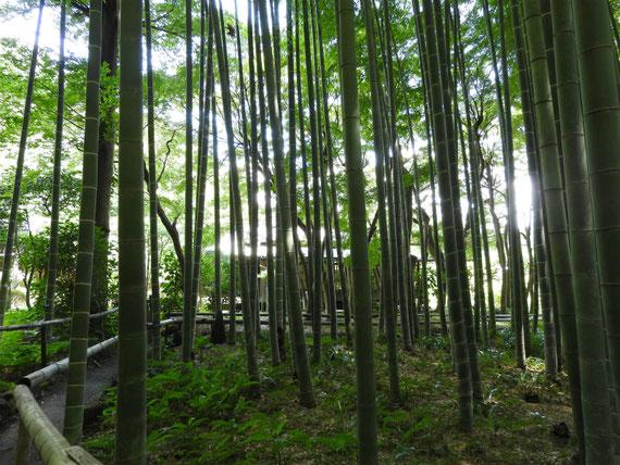 竹林の遊歩道と書院