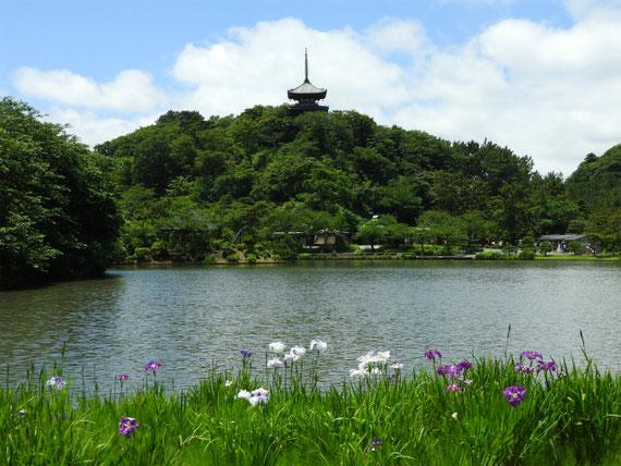 花菖蒲と池
