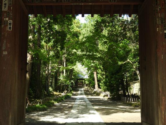 壽福金剛禅寺山門から参道をみる 8月