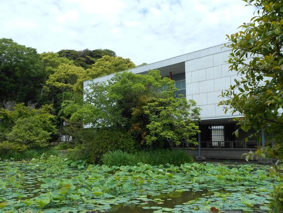 平家池から美術館を望む、本館  5月の蓮の葉、木立、白壁、鉄骨柱