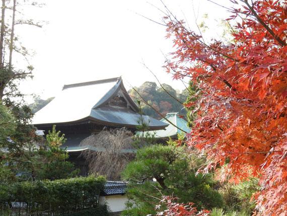 龍峰いんからみる、紅葉の法堂