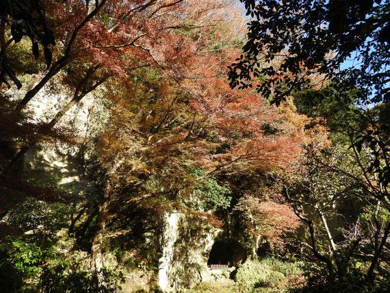 竹の庭の奥にある、紅葉の「足利氏のやぐら」