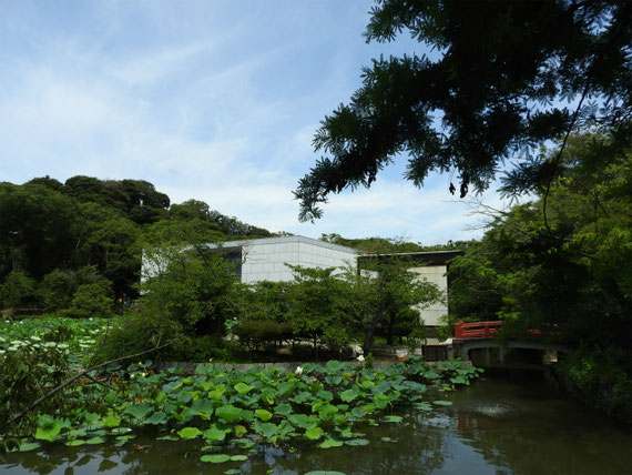平家池からみる近代美術館