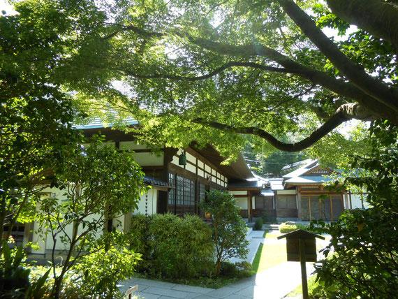 喜泉庵入り口の木立から本堂を望む。このアングルがお気に入りです。
