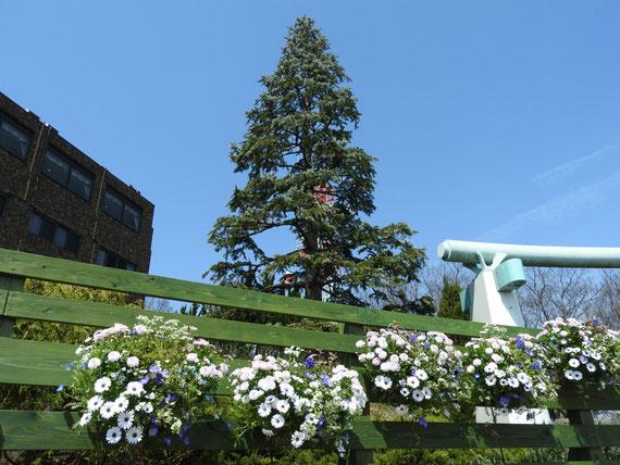 港の見える丘公園 花壇