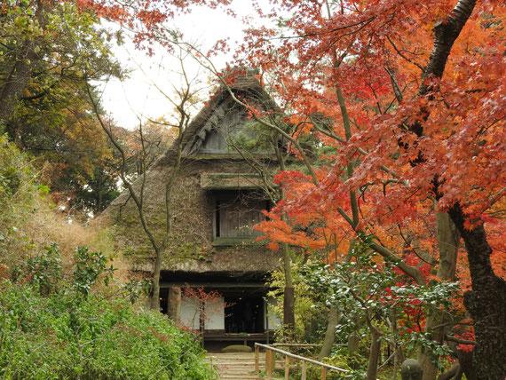 紅葉の旧矢箆原家住宅(合掌造り)