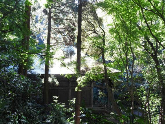 鐘楼から観る、樹木に包まれた法華堂