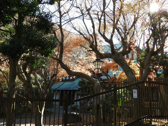 外部門塀から観る紅葉の旧華頂宮邸