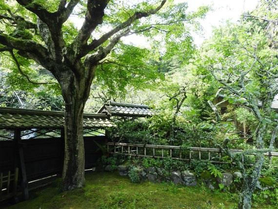 本堂から水月堂庭園をみる