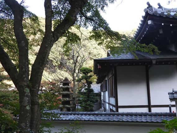 佛日庵の塀越しの風景