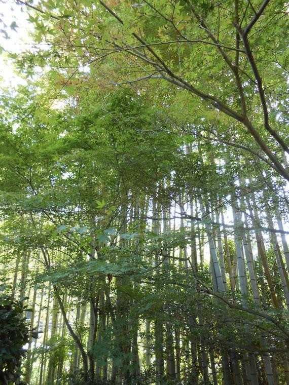 禅の世界・・・竹林