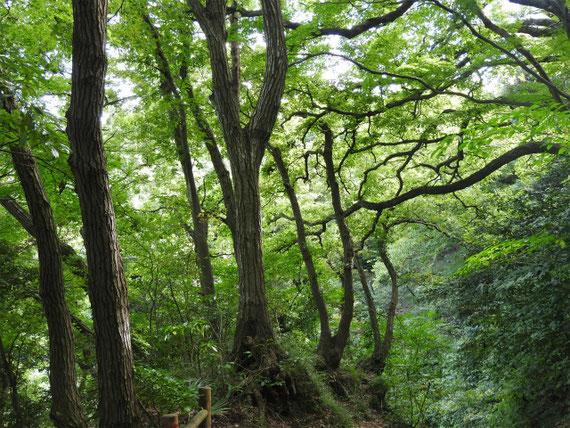 海蔵寺から源氏山への山道