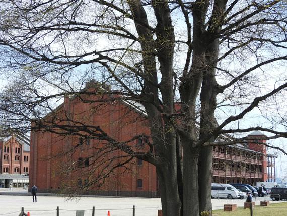 赤レンガ倉庫1号館(文化施設)入り口へ