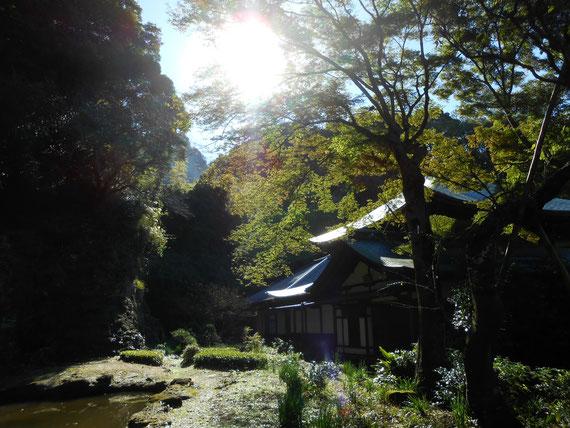 本堂裏の、朝の樹木に囲まれた瑞泉寺庭園。 素晴らしく風情のある庭園の朝