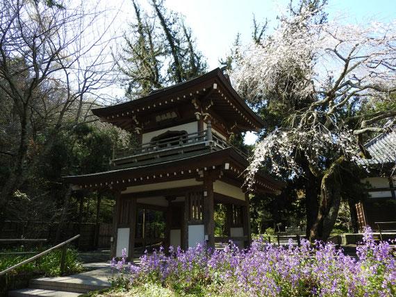 浄智寺鐘楼門と袋撫子