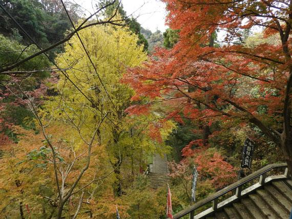 下山途中からみる、半僧坊入り口鳥居の紅葉