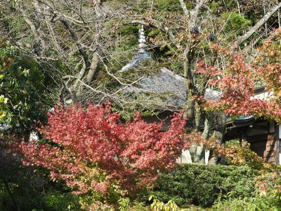 臨済寺壮経