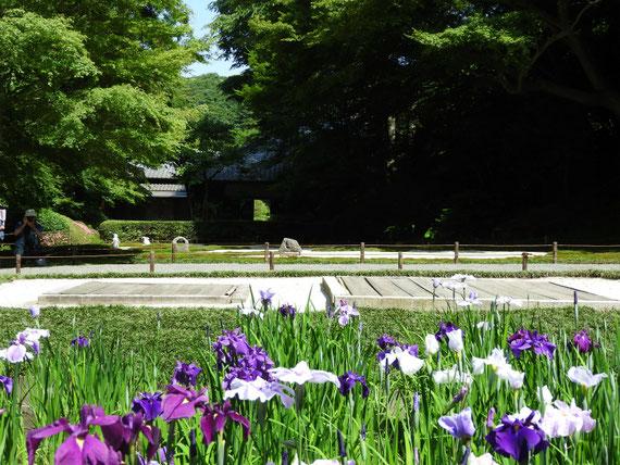 後庭園から明月院本堂を観る