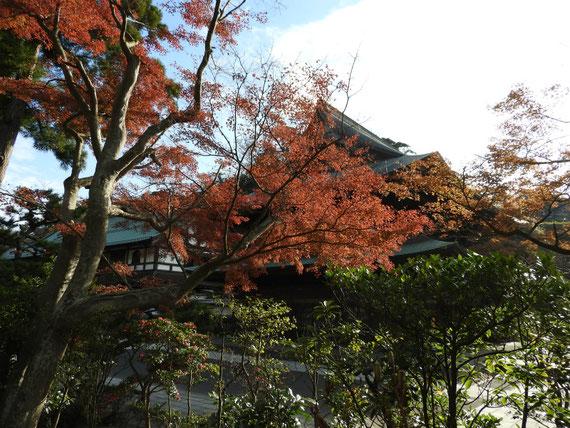 紅葉の建長寺法堂と大庫裏